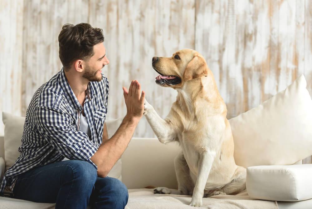 新型コロナ感染をペットと予防する方法