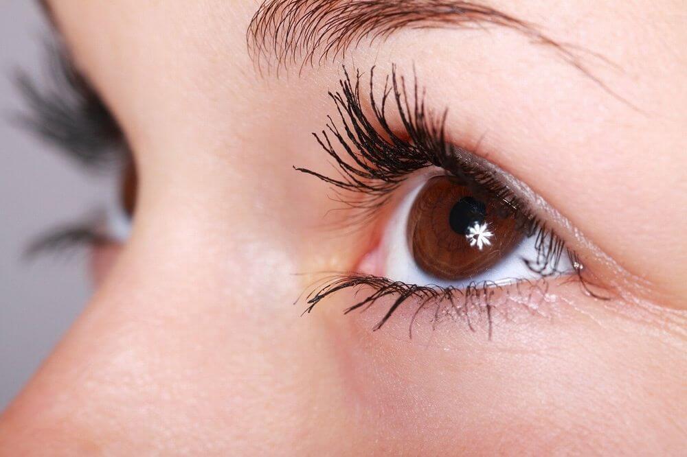認知機能、視力、免疫力の向上