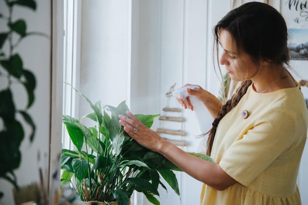 観葉植物でお部屋の空気清浄や加湿調整!